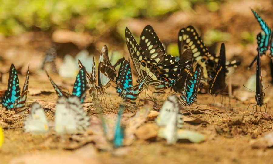 farfalle-natura